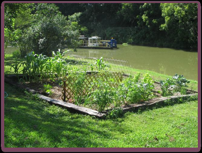 Garden Plans for 2016