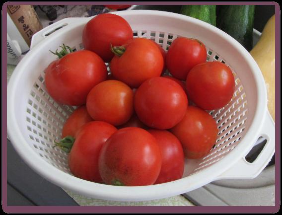 Tomatoes everywhere!